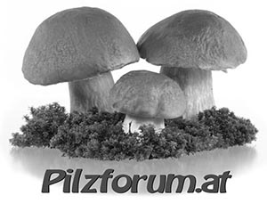 Pilzforum.at